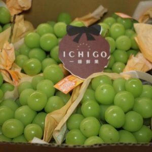 長野麝香葡萄1