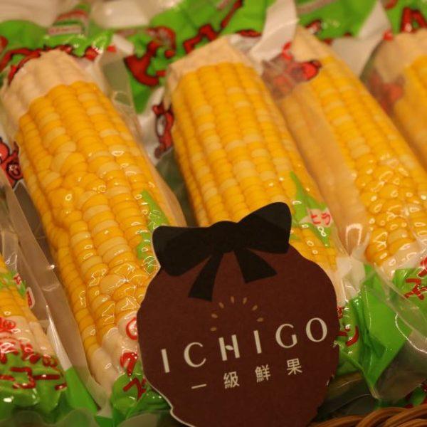 北海道玉米1